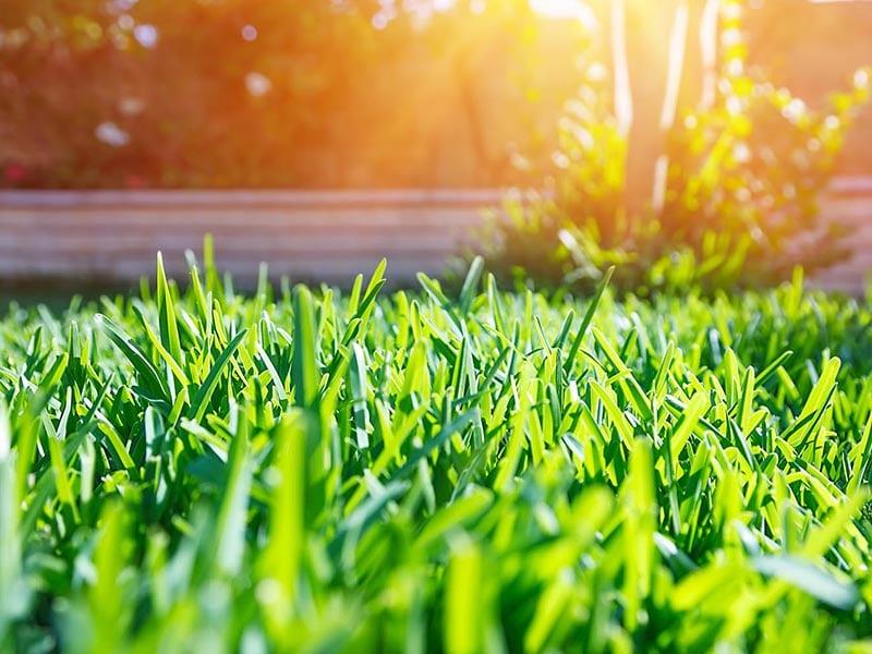 lawn mowing service elimbah